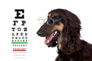 Black dog with glasses and a exam vi