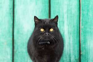 black cat with yellow eyes on a