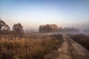 Morning fog in forest