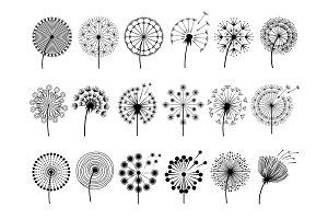 Dandelion silhouettes. Herbal