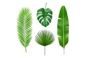 Tropical leaves. Jungle green plant