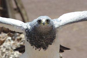 Eyes of a eagle