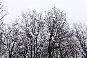 silhouettes of tree trunks