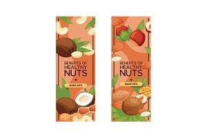 Nut vector nutshell of hazelnut