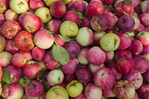 Red apples with green leaves fresh