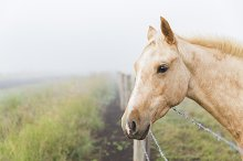 Horse in fog by  in Animals