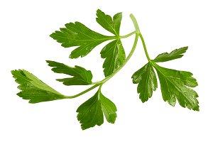 Fresh parsley leaves isolated on whi