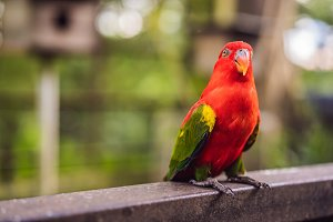 Colorful portrait of Amazon macaw
