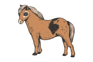 Pony small horse color engraving