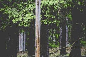 sculpture at coniferous forest