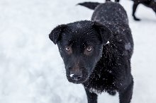 Stray dogs in the winter outside by  in Animals