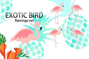 Exotic bird flamingo collection