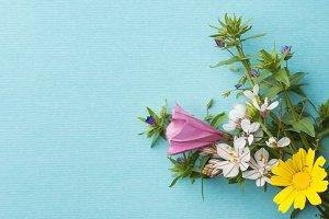 Bouquet of field flowers on blue