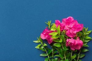 Bouquet of garden fuchsia flowers