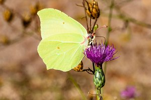 White butterfly on violet flower