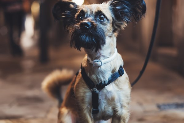 Animal Stock Photos: A_B_C - Little dog in the city