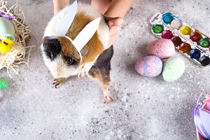A guinea pig in a hand with Easter