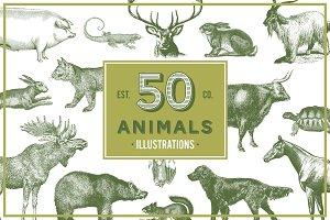 Animals Vector Vintage Illustrotions