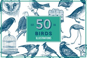 Birds Vintage Vector Illustrations