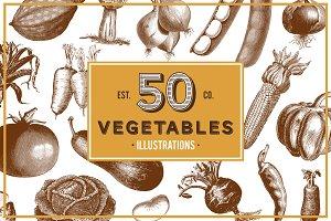 Vegetables Vintage Illustrations