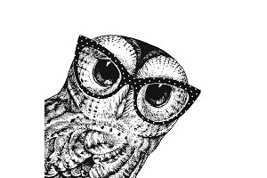 Cute Owl Wearing Glasses