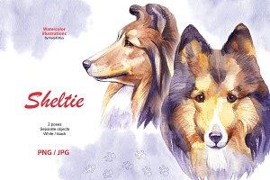 Watercolor dog - Sheltie