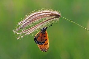Butterflies, Butterfly,
