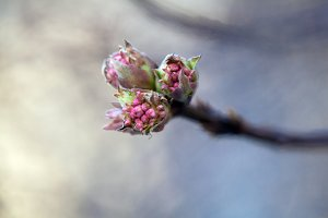 Nature and blooming in spring time