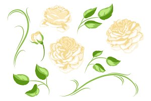 Set of yellow roses. Beautiful