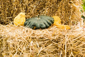 Hay bales with gourds