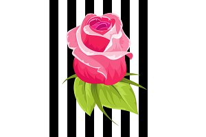 Pink rose bud. Vintage flower