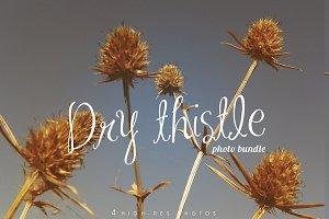 Dry thistle photo set