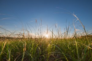 Sunrise and feather grass on meadow
