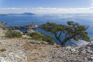 Juniper on a cliff above the sea.
