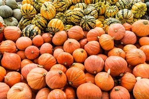 Display of winter squash