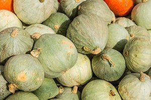 Blue winter squash display