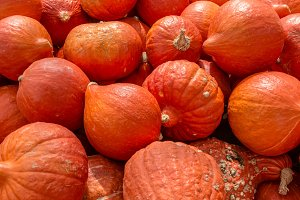 Orange hubbard winter squash