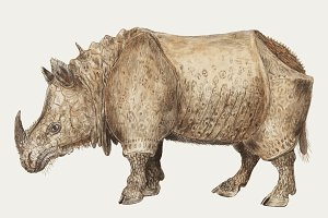 Indian rhinoceros illustration