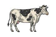 Cow rural farm animal engraving