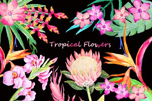 Watercolor Tropical Foliage Flowers