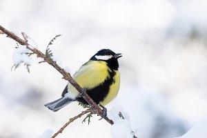 the bird Park in winter