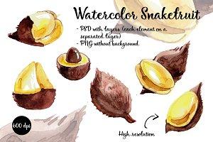 Snakefruit, salacca, watercolor