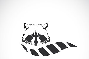 Vector of raccoon design.Wild Animal