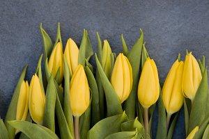 bunch os yellow tulips