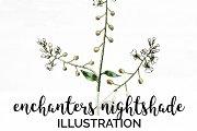 enchanters nightshade Vintage Floral