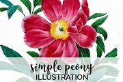 Peony Clipart Pink Flowers