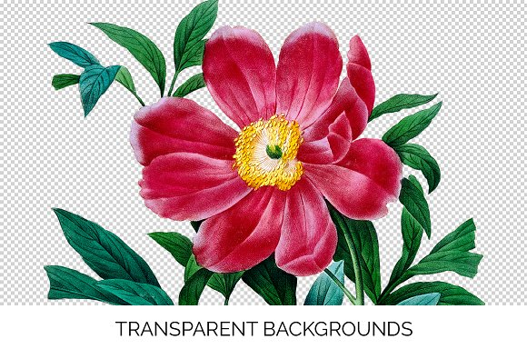 Peony Clipart Pink Flowers in Illustrations - product preview 2