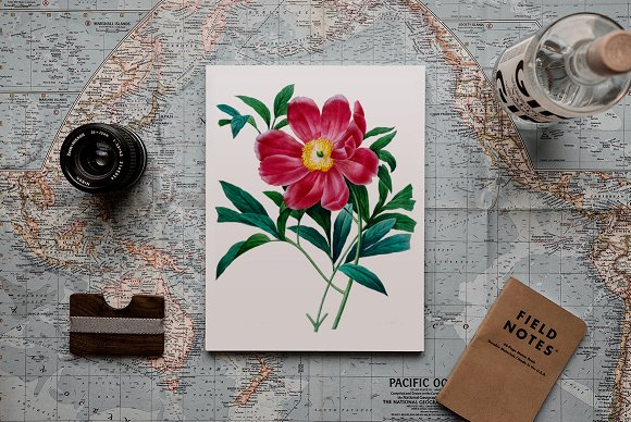 Peony Clipart Pink Flowers in Illustrations - product preview 3