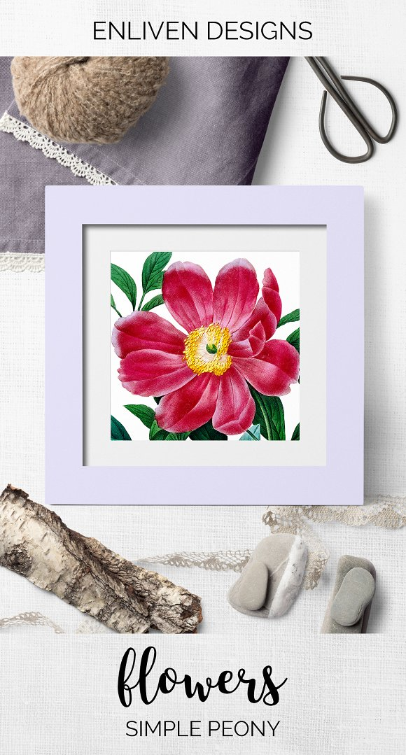 Peony Clipart Pink Flowers in Illustrations - product preview 7