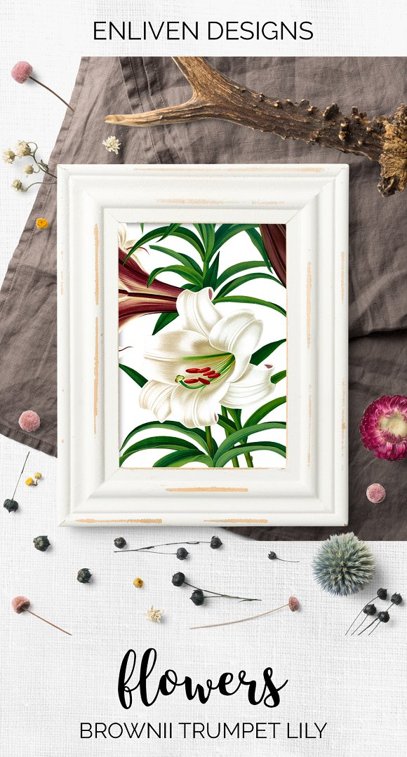 Lily White Flowers Lilies in Illustrations - product preview 7